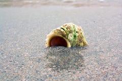 Shell y agua Foto de archivo libre de regalías