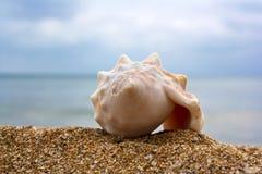 Shell y cielo azul Fotos de archivo libres de regalías