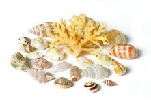 Shell y coral del mar aislados en blanco foto de archivo