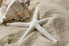Shell y estrellas de mar en la playa fotografía de archivo