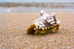Shell y onda Imagen de archivo