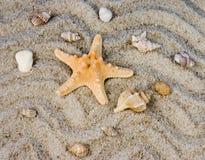 Shell y peces de mar foto de archivo