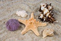 Shell y peces de mar imagen de archivo libre de regalías