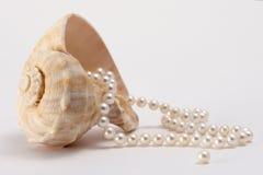 Shell y perlas Foto de archivo libre de regalías