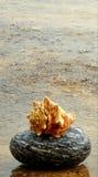 Shell y piedra Imagenes de archivo