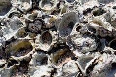 Shell y piedra en el mar Foto de archivo libre de regalías