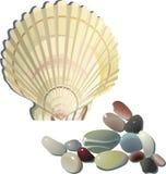 shell y piedras decorativos del mar imagen de archivo libre de regalías