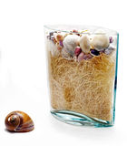 Shell y un florero con los seashells Imágenes de archivo libres de regalías