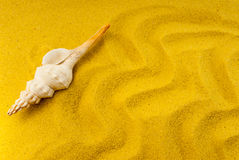 Shell on the yellow sand Royalty Free Stock Image