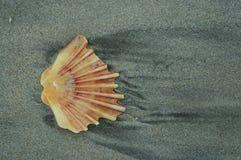 Shell in zand Royalty-vrije Stock Foto