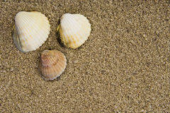 Shell in zand Stock Afbeelding