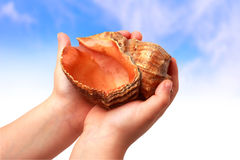 Shellandsky Foto de Stock