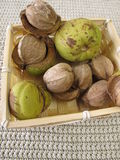 Shellbark hickory nuts in basket Stock Image