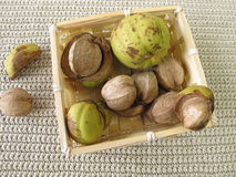 Shellbark hickory nuts in basket Royalty Free Stock Photo