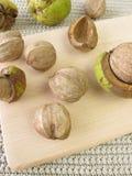 Shellbark hickory nuts Royalty Free Stock Photo