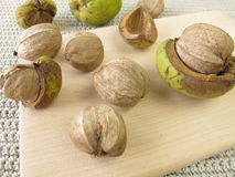 Shellbark hickory nuts Royalty Free Stock Photography