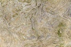 Shellbearing limestone closeup Stock Images