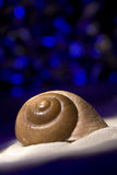 shellblue Στοκ Φωτογραφία