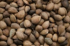 Shelled almonds texture and background for design. Heap of almonds close up view. Healthy food. stock photography