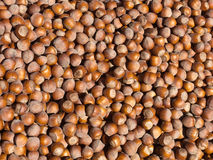 Shelled Hazelnuts Stock Photos