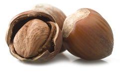 Shelled hazelnuts Stock Image