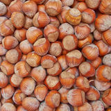 Shelled hazelnuts closeup Royalty Free Stock Image