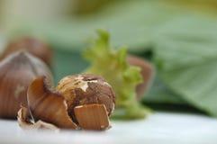 Shelled hazelnuts Stock Photo