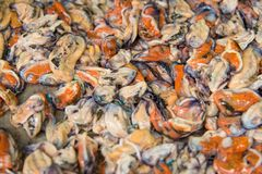 Shelled mussels in Thailand at the fish market in Chanthaburi. Shelled mussels in Thailand at the fish market in Chanthaburi stock photography