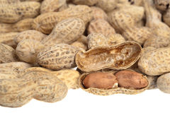 Shelled peanuts Stock Image