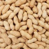 Shelled peanuts (Arachis hypogaea) Stock Photography
