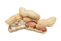 Shelled peanuts (Arachis hypogaea) Royalty Free Stock Image