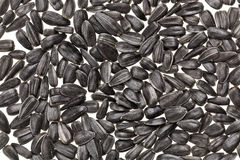 Shelled sunflower seeds Royalty Free Stock Images