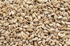 Shelled sunflower seeds Stock Image