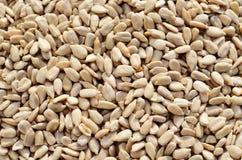 Shelled sunflower seeds Stock Image