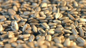 Shelled sunflower seeds on a green background. 2 Shots. Close-up. stock footage
