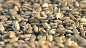 Shelled sunflower seeds on a white background. 2 Shots. Close-up. stock video footage
