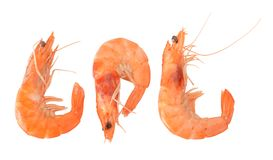 Shelled tiger shrimps Stock Image