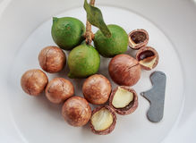 Shelled and unshelled macadamia nuts Stock Photos