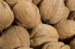 Shelled Walnuts. Fresh walnuts in their shells stock image