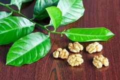 Shelled walnuts. And green leaves Stock Images