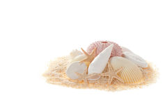 Shelles Foto de archivo