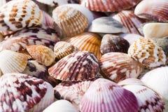 Shelles Imagen de archivo libre de regalías