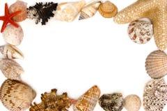 Shelles Imagen de archivo