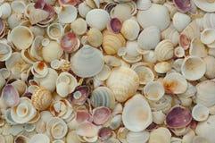 Shelles Imágenes de archivo libres de regalías