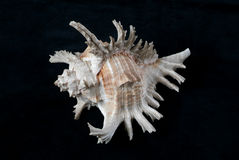 shelles fotografía de archivo libre de regalías