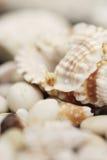 Shelles Foto de archivo libre de regalías