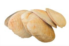Shelles acuáticos del molusco Foto de archivo libre de regalías