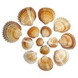 Shelles aislados Imágenes de archivo libres de regalías