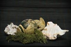 Shelles antiguos del florero y del mar Foto de archivo