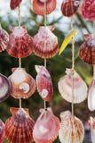 Shelles coloridos Fotos de archivo libres de regalías